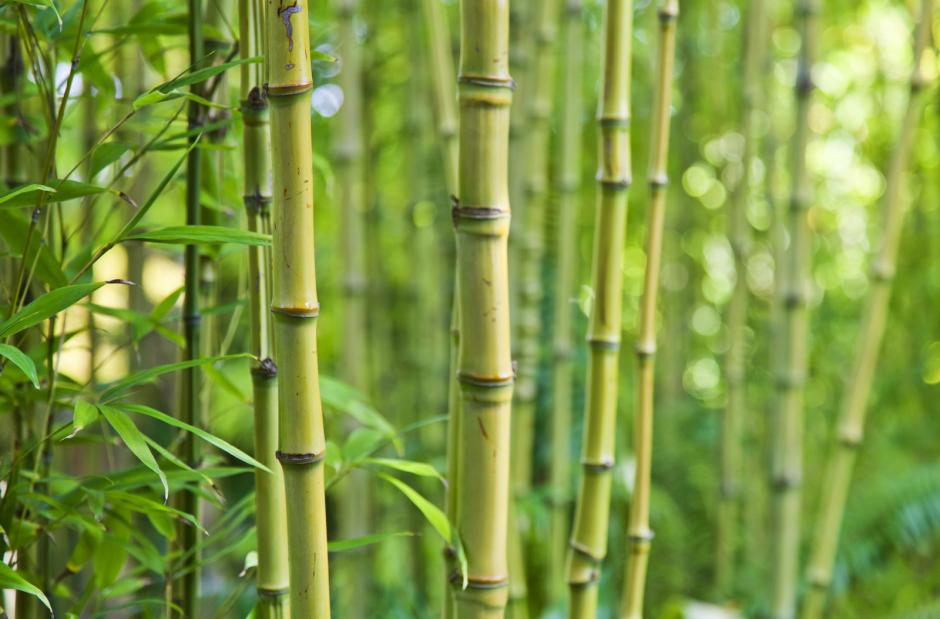 parquet bamboo a milano